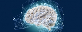 Scientists prove that brain reaches its peak in 35 years