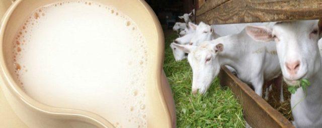 На Ставрополье доставили 1000 коз из Нидерландов для производства сыра