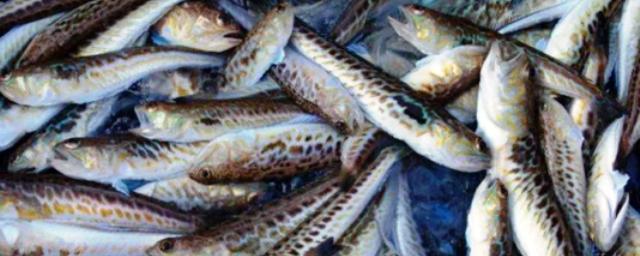 На рыбном заводе в Ленобласти выявлены угроза сибирской язвы и крысы