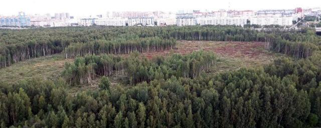 В петербургском заказнике нашли тело закопанной в землю по шею женщины