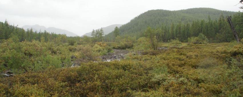 Мэр Магадана поддержал идею создания «зеленого пояса» в «Снежной Долине»