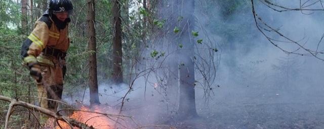 Из-за лесного пожара в Удмуртии пострадал национальный парк «Нечкинский»