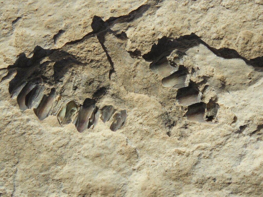 В Саудовской Аравии были обнаружены следы древних людей