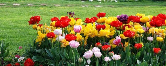 Праздник цветов в уфе