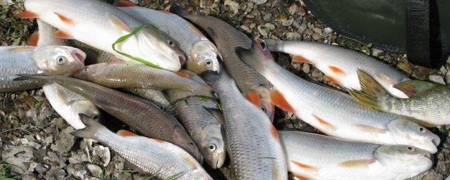 запрещена рыбалка на дону