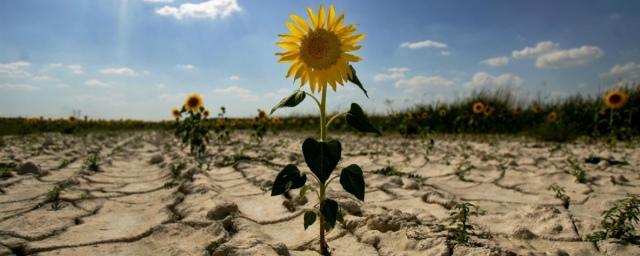 В Чувашии из-за засухи введен режим ЧС