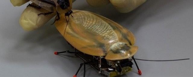 Инновации: Министр образования РФ заявил о необходимости массового производства роботов-тараканов