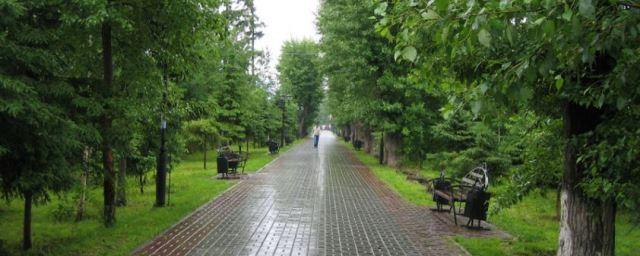 Бальзамические тополя посадят на проспекте Кирова вместо выбранных томичами лип