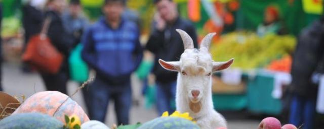 В Краснодаре с 15 октября возобновят работу ярмарки выходного дня