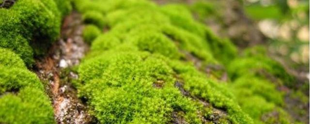 Ученые: Первые растения на Земле появились около 500 млн лет назад