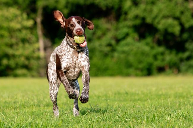 пробежка с собакой