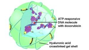 Здоровье лечение рака нанокапсула