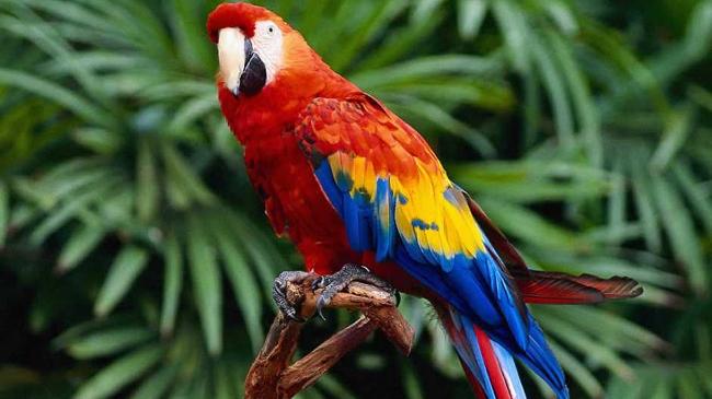 В Уфе открылась выставка экзотических птиц и животных