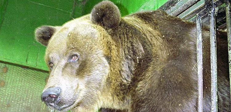 Ленинградский зоопарк сообщил о смерти самой старой в мире медведицы