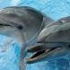 В Краснодаре дельфинарий Sea Life откроется в конце октября