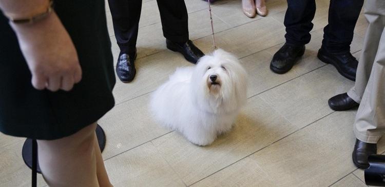 В США разработали устройство для дистанционного общения с собакой