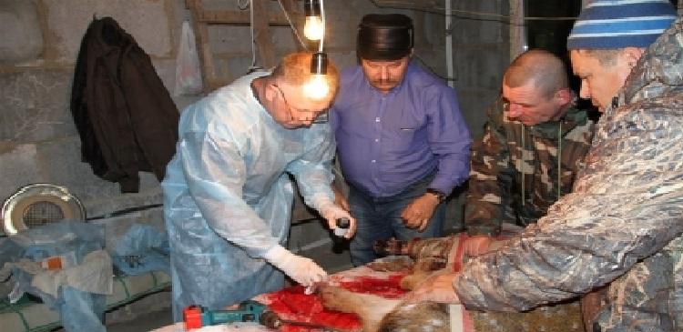 В Челябинской области в нацпарке Таганай травматолог спас олениху