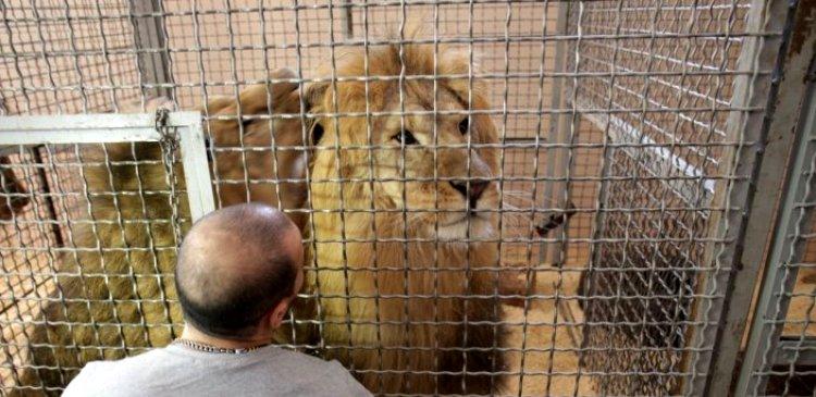 екат львы выступят