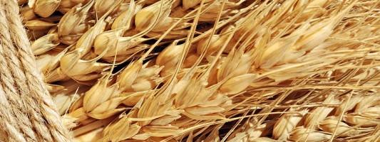 Азербайджан закупит у ставропольских аграриев элитные семена