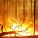 В Туве из-за лесных пожаров объявлен режим ЧС