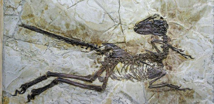 динозавр останки