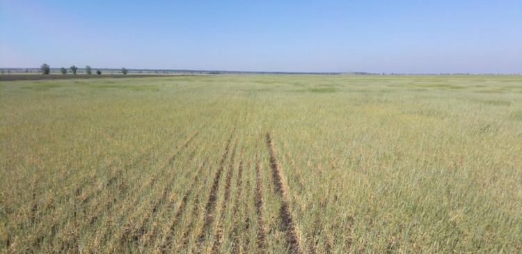 саратов засуха фото