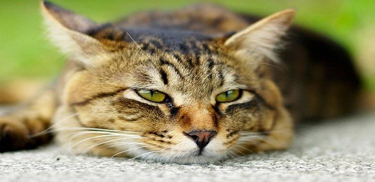 26 кошек